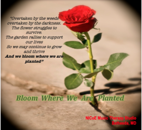 Open red rose and song lyrics